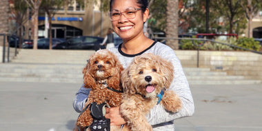 Meet Phoenix and Peanut the Cavapoochons from Playa Vista!