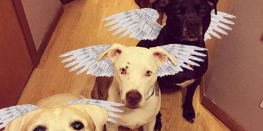 These Four Pit Bulls Saved a Woman's Life and Here's How