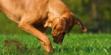 6 Causes of Destructive Digging and 7 Ways To Stop Your Dog From Digging