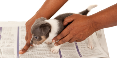 10 Steps To Paper-Train Your New Puppy