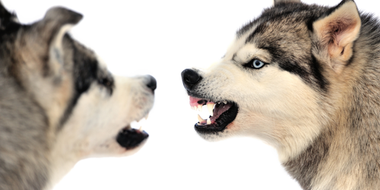 4 Ways to Stop Your Dogs From Fighting With Each Other