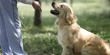 3 Easy Leadership Exercises to Do With Your Dog