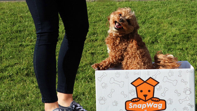 SnapWag Subscription Dog Box Cavapoochan
