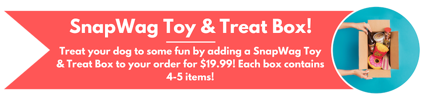 Dog Subscription Toy and Treat Box