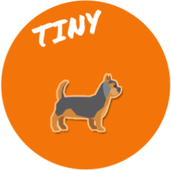 Tiny Size Dog Breed