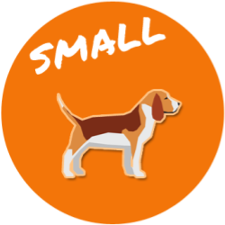 Small Size Dog Breed