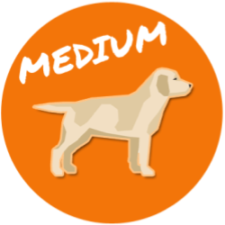 Medium Size Dog Breed