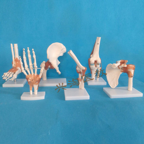 Six-Piece Human Joint Skeleton Model,  Shoulder, Elbow, Wrist, Hip, Knee And Ankle