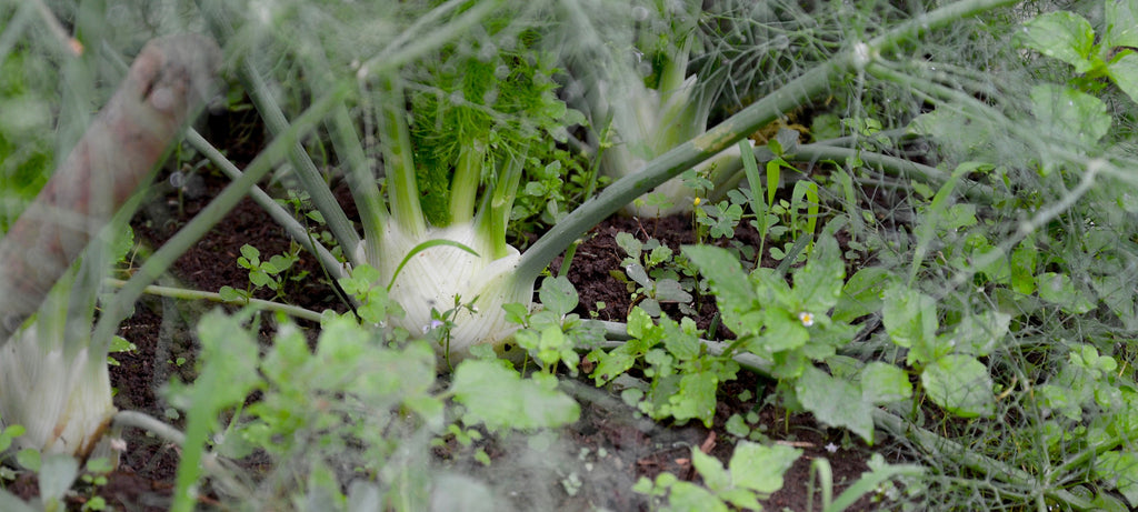 Photo of garden in Thailand farm for Ratatouille HK homepage