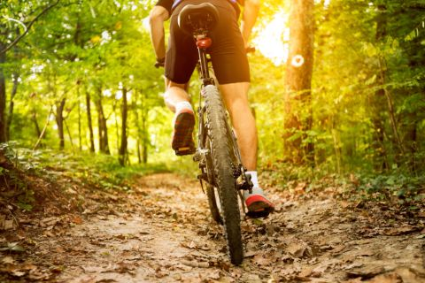 Back view of a mountain biker in the forest