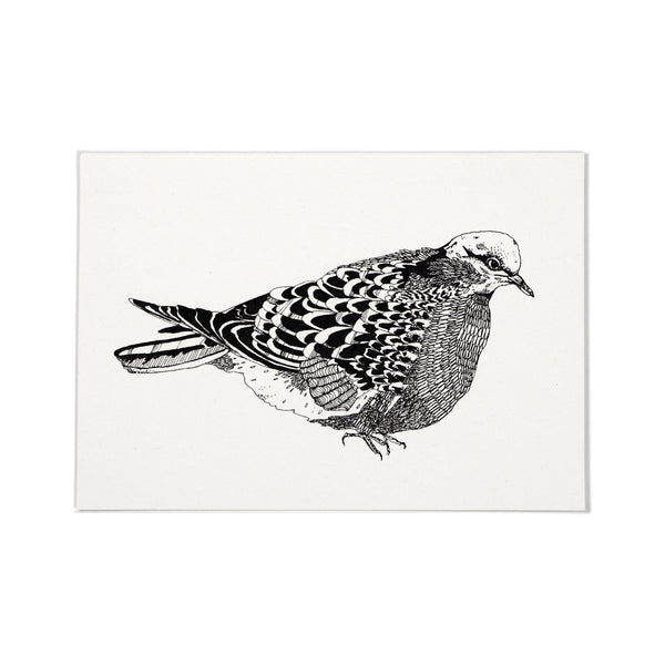 Gift Card - Pigeon