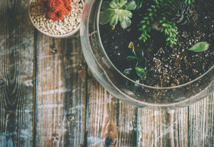 How To Make A Terrarium Turning Tiny Ecosystems Into A Blooming