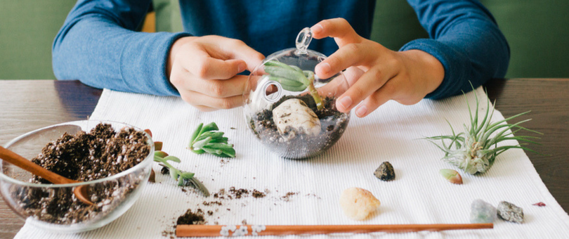 How to Make A Terrarium: Turning Tiny Ecosystems Into a Blooming Business