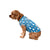 Detroit Lions NFL Busy Block Dog Sweater