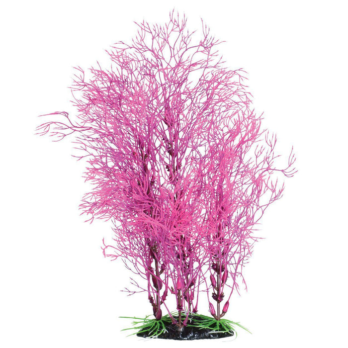 Underwater Treasures | Fuscia Fern