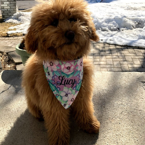 Personalized Dog Bandanna Collars