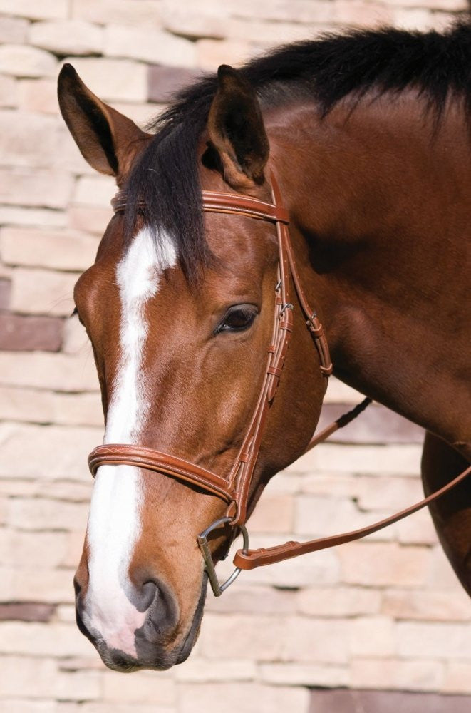 HDR Fancy Raised Padded Bridle W/ Laced Reins Pro