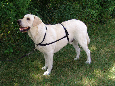 GENTLE LEADER Ultimate Dog Harness - Canadian Pet Connection
