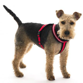 HALTI Comfy Harness - Red Black - Small / Medium / Large - Canadian Pet Connection