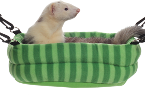 Marshall 2 in 1 Ferret Bed versatile ferret bed for one or two fuzzy friends