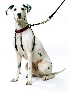 SPORN Halter for Dogs - Canadian Pet Connection
