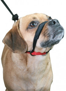 SPORN Head Halter for Dogs - Canadian Pet Connection
