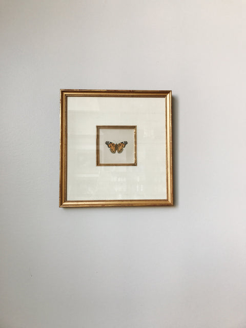 Butterflies<br/>Hand-colored Lithograph