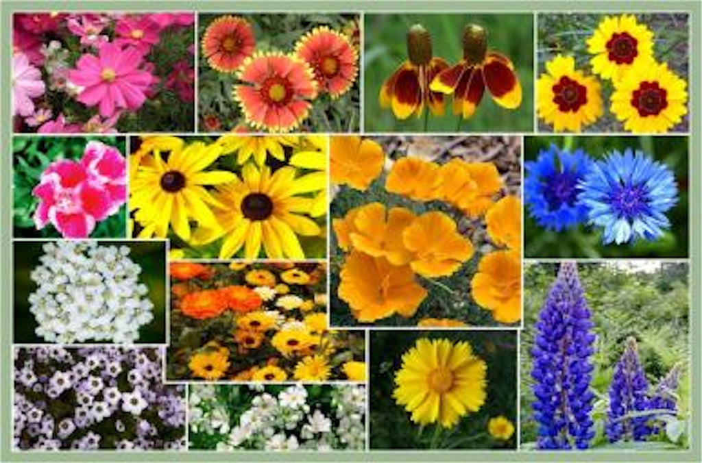 Bird & Butterfly Wildflower Collection seeds