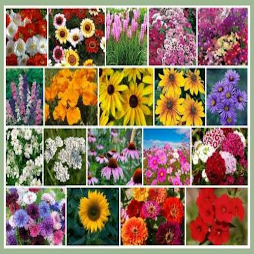 Fall Blooming Wildflower Seed Mix