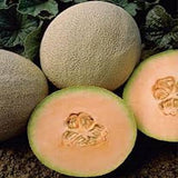 Two Melon Combo USDA Organic seeds