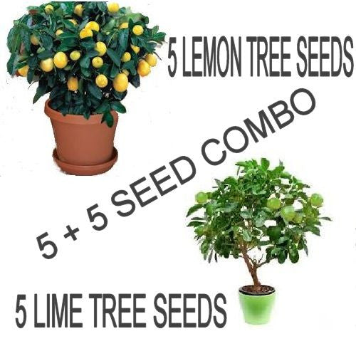Lemon Tree/ Lime Tree seed pack Combo Special!!