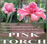 Pink Torch Ginger seeds