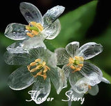 "RARE "" CLEAR"" flowering plant Approx 10 seeds"