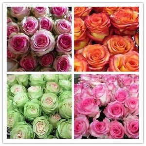 Ecuador Rare Rose Mix seeds