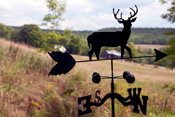 Buck Weathervane