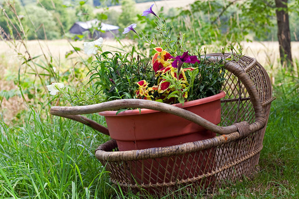Flowers in a baby basket