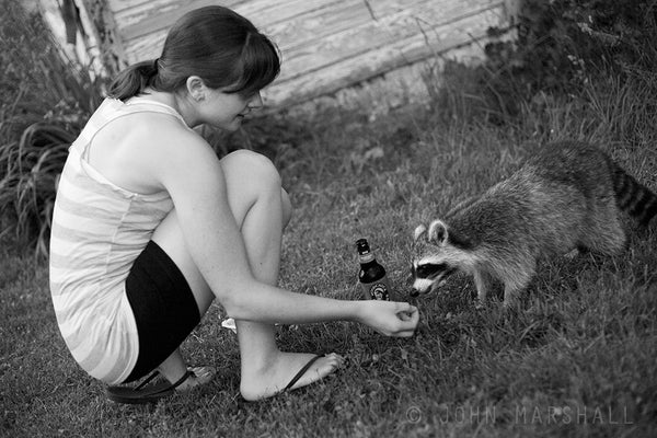 Feeding the raccoon