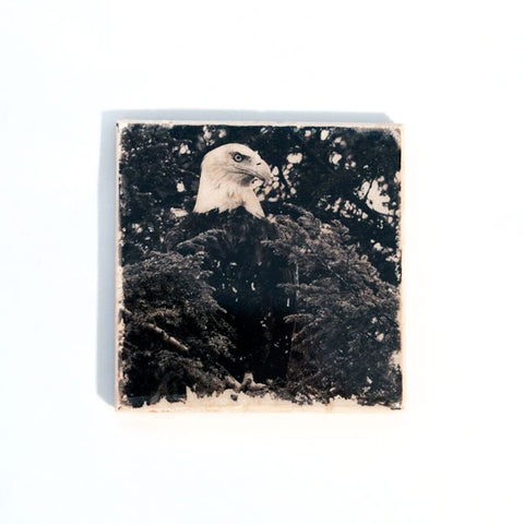 Bald Eagle Coaster at www.inktheprint.com