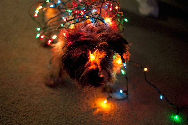 Doggie Christmas Tree