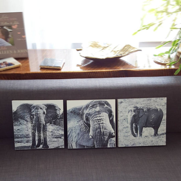 Black and White Elephants on Wood Panels