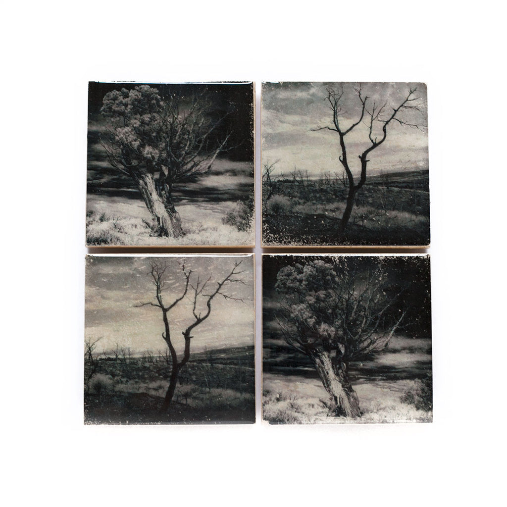Black and White Tree Coasters