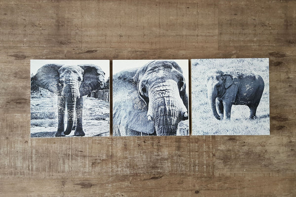 Elephant Wall Art Set of 3