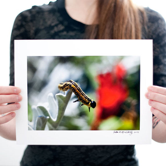 Caterpillar Photograph Wall Art