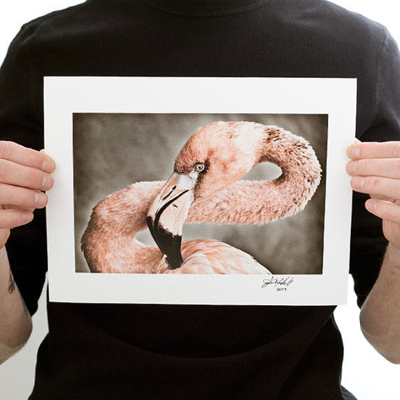 Pink Flamingo Photograph