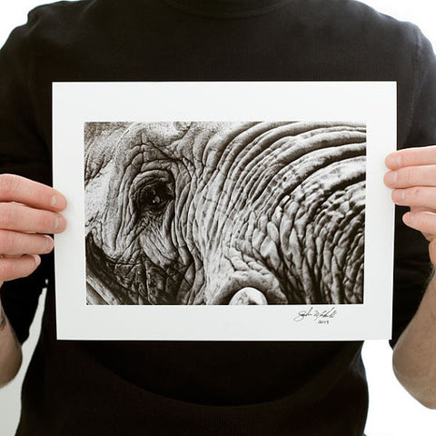 Elephant Photograph Black and White Close Up