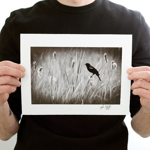 Red-winged Blackbird Photograph