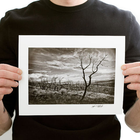 Black and White Lone Burnt Tree in a Field Photograph
