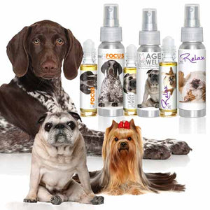 dog aromatherapy wholesale