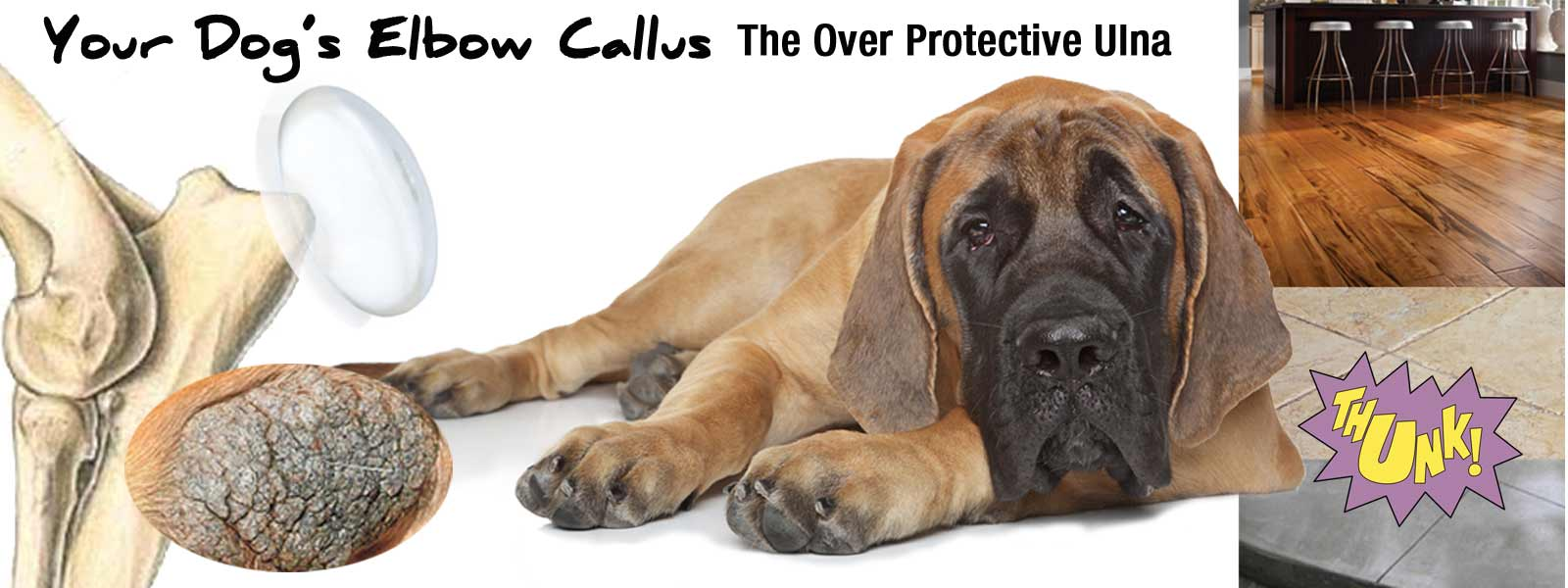 Canine elbow calluses