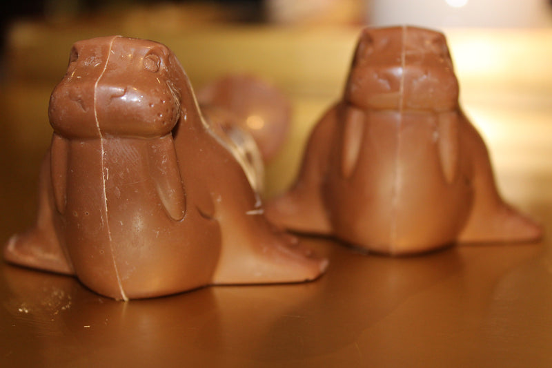 Chocolate Walrus